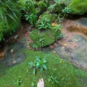 Expedition a pied en foret tropicale (jungle,). Pieds nus. Sur de la mousse.