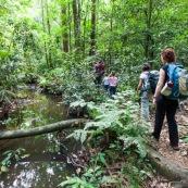 Randonnee a Saül en foret tropicale amazonienne. Riviere. Crique. Sentier Roche bateau. En famille. Avec des enfants et bebe.  Parc amazonien de Guyane.