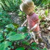 Randonnee a Saul en foret tropicale amazonienne. Parc amazonien de Guyane. Enfant (bebe) en train de decouvrir la nature. Tourisme en famille.