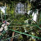 Tour pour monter dans la canopée en foret tropicale (foret amazonienne, Yasuni, Equteur).