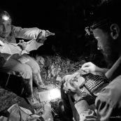 Scientifique biologistes etudient les chauve-souris, echantillons de salive pour analyse ADN. A Yasuni, Equateur.