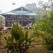 Pluie en foret tropicale.