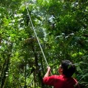 Botaniste dans la jungle sur le terrain en train de prélever des échantillons de feuilles, fruits et fleurs d'arbre. Avec une perche pour couper les branches. Foret tropicale amazonienne Equateur.