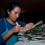 Fabrication d'un herbier par une botaniste.