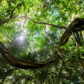Forêt amazonienne - Saül - Guyane