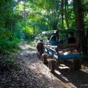 Cariole à cheval dans la forêt tropicale. Carrosse.