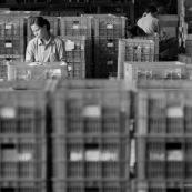 Usine en CHine. Ouvriers serrieres des bacs ou s'accumulent les produits.