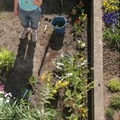 Jardin en ville. Printemps. Bambou. Tulipes. Narcisses. pots de fleur. Plantes vivaces. Femme en train de planter des fleurs dans son jardin. Vue en plongee,  du dessus.  Outils de jardin visibles. En train de jardiner.   Petit jardin individuel des maisons type 1930 du departement du Nord.