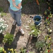 Jardin en ville. Printemps. Bambou. Femme en train de jardiner et de planter des fleurs dans son jardin. Vue en plongee,  du dessus.   Petit jardin individuel des maisons type 1930 du departement du Nord.