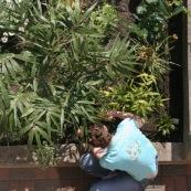 Jardin en ville. Printemps. Bambou. Femme en train de jardiner et de planter des fleurs dans son jardin. Vue en plongee,  du dessus. En train de jardiner.   Petit jardin individuel des maisons type 1930 du departement du Nord.