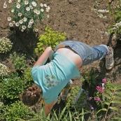 Jardin en ville. Printemps. Bambou. Tulipes. Narcisses. pots de fleur. Plantes vivaces. Femme en train de planter des fleurs dans son jardin. Vue en plongee,  du dessus.  Outils de jardin visibles. En train de jardiner.   Petit jardin individuel des maisons type 1930 du dÈpartement du Nord.