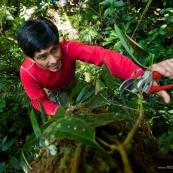 Botaniste en haut d'un arbre
