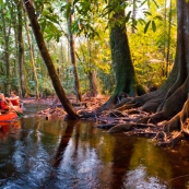 Canoe sur la crique gabrielle dans la reserve naturelle des marais de Kaw, avant le lac pali. Foret tropicale amazonienne. Guyane. Riviere.