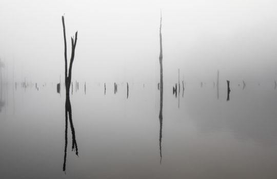 Lac de Petit Saut