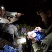 Biologistes étudiant les chauve-souris tropicales